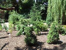 Botanische Tuin Delft : Botanische tuin tu delft wikipedia