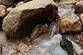 Arethusa Falls, Arethusa Falls Trail, Hart's Location (494273) (11924638373).jpg