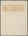 Argentina silus - 1700-1880 - Print - Iconographia Zoologica - Special Collections University of Amsterdam - UBA01 IZ14800077.tif