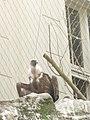 Artis, Zoo, Dierentuin - panoramio (69).jpg