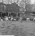 Artis 125 jaar dierentuin Flamingos, Bestanddeelnr 915-1167.jpg