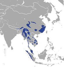 Asiatic Golden Cat area.png