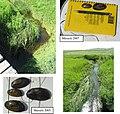 Assessment of aquatic habitats on the Matador Ranch Phillips Co., MT (2007) (19888876454).jpg