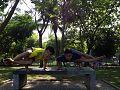 Astavakrasana at eco park ancol jakarta.jpg