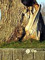 Auslikon - Strandbad 2011-12-27 15-28-29 (SX230).JPG