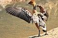 Austin Roberts Bird Sanctuary-011.jpg