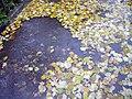 Autumn E7.jpg