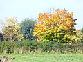 Autumn by Sussex Farm - geograph.org.uk - 1001462.jpg