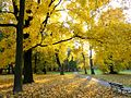 Autumn in Decjusz Park.jpg