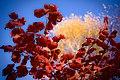 Autumn true color - Flickr - carefulweb.jpg