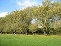 Avenue of trees - geograph.org.uk - 1078864.jpg
