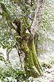 Bäume Schauinsland (Freiburg) jm22327.jpg