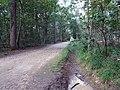 Balade en Forêt de Verrières le 20 août 2017 - 010.jpg
