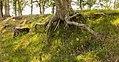 Balloërveld, natuurgebied in Drenthe 025.jpg