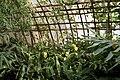 Bambouseraie de Prafrance 20100904 113.jpg