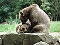 Bear 01.JPG