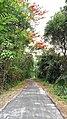 Beautiful Roads through CPCRI, Vitla in summer.jpg