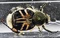 Beetle, FOBU, com, 10698 2012-11-14-13.50 (8206112297).jpg