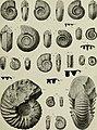 Beiträge zur Paläontologie und Geologie Österreich-Ungarns und des Orients - Mitteilungen des Geologischen und Paläontologischen Institutes der Universität Wien (1911) (20336327146).jpg