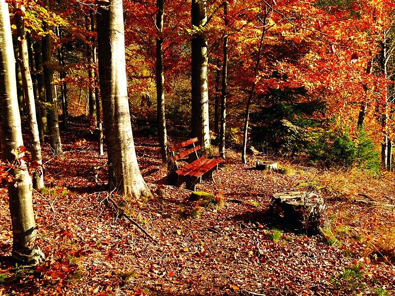 File:Bench Nearly Schönegrund - panoramio.jpg