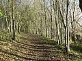 Beside Lochty Burn - geograph.org.uk - 284220.jpg