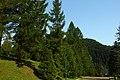 Bieszczady. Okolice ośrodka Bystre u wylotu Doliny Rabego. - panoramio.jpg