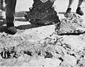 Bikini Resurvey reseachers lifting up a rock to uncover a crab on Uku Island, summer 1947 (DONALDSON 64).jpeg