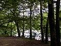 Biogradska gora - National Park, the oldest protected natural resource in Montenegro 08.jpg