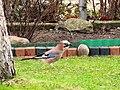 Birds 13 (23964271665).jpg