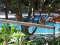 Birds at Edsa Shangri-La - panoramio.jpg