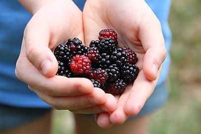 Blackberries-6383