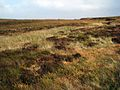 Boggy moorland seen from the summit of the Ayr to Newton Stewart road - geograph.org.uk - 334210.jpg