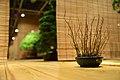 Bonsai exhibition in the Moscow Botanical Garden, Moscow; November 2015 (19).jpg