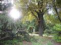 Botanička bašta Jevremovac 004.JPG