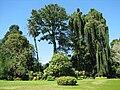 Botanical Garden of Peradeniya 04.jpg