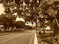 Botanique urbaine à Evreux 4.jpg