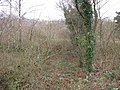 Brambles and thickets at Cae Doctor Nature Reserve - geograph.org.uk - 335426.jpg