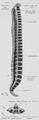 Braus 1921 82.png