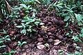 Brazil nut pile DSC05552.JPG