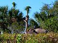 Brevard Zoo Kayak Tour thru Africa - Flickr - Rusty Clark (3).jpg