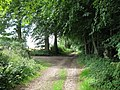 Bridleway leading from Warburg Nature Reserve - geograph.org.uk - 1419868.jpg