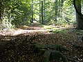 Bridleway through Bensgrove Wood - geograph.org.uk - 590525.jpg