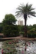 Brisbane City Botanic Gardens (02).jpg