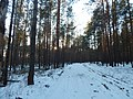 Bryansky District, Bryansk Oblast, Russia - panoramio (38).jpg
