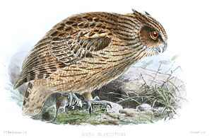 Blakiston's fish owl - Illustration by J. G. Keulemans