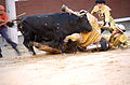 Bullfighting (7185184032).jpg