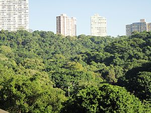 Burman Bush - A westward view over Burman Bush Nature Reserve and the residential buildings beyond it