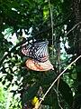 Butterfly Romance.jpg