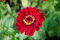 CBG red flower 0105.jpg