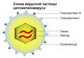 CMVschema-ru.png